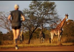 מרתון לימפופו, דרום אפריקה