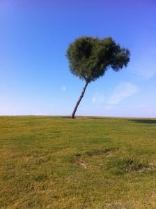 כמה באמת שווה כל עץ בעיר?