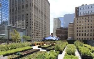 חקלאות עירונית אינה רק תחביב- זו תעשייה שעשויה לשנות לחלוטין את איכות החיים שלנו