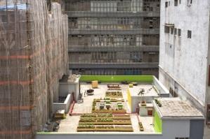 חקלאות עירונית בהונג קונג