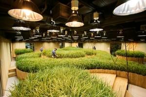 חקלאות תת קרקעית בטוקיו
