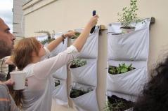 תושבים לומדים לגדל מזון על קיר חקלאות אורבנית במזאה 9