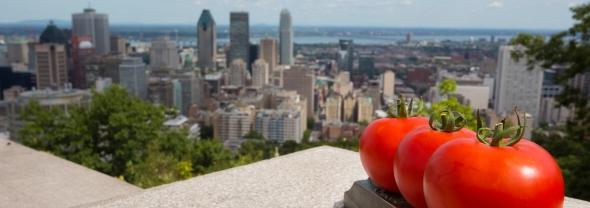חקלאות עירונית במונטריאול