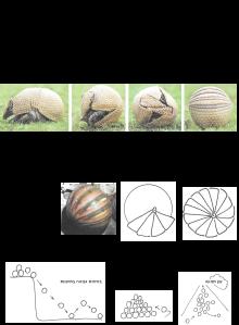 מערכת תנועה אורבנית - מבנה הכדור