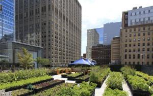 חקלאות עירונית בניו יורק
